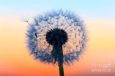 Photograph - Dandelion Seeds by Patrick Frischknecht