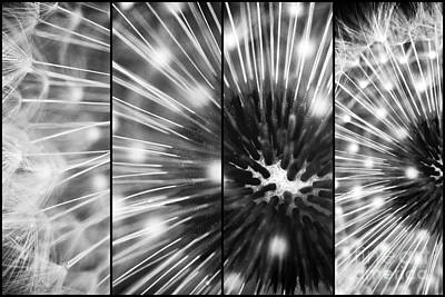 Photograph - Dandelion Sparkle Panels by John Rizzuto