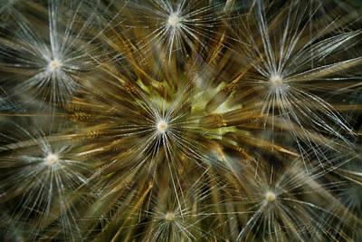 Ns Photograph - Dandelion Starburst by Iris Richardson