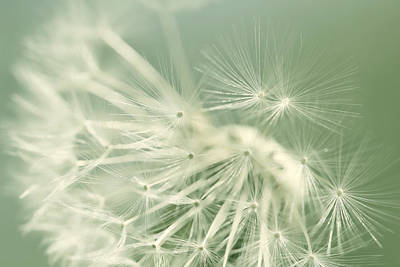 Photograph - Dandelion Weed Soft Green by Jennie Marie Schell