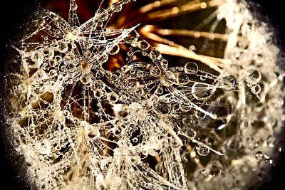 Photograph - Dandelion With Dew by Peggy Collins