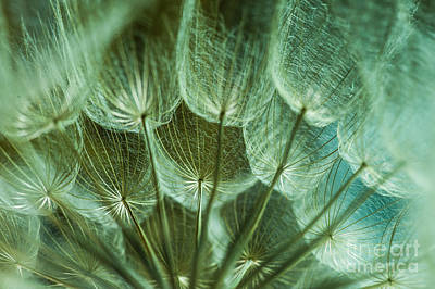 Dandelions 06 Art Print