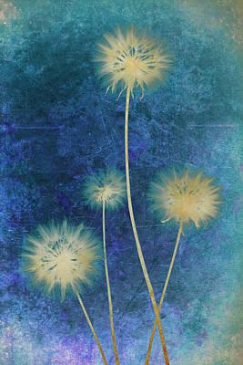Dandelions Art Print by Nicole Neuefeind