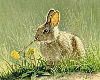 Rabbit Painting - Dandi-nibbler by Paul Krapf