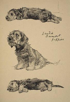 Dandie Dinmont Puppies, 1930 Art Print by Cecil Charles Windsor Aldin
