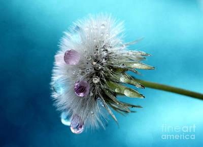 Whimsy Photograph - Dandy Candy by Krissy Katsimbras
