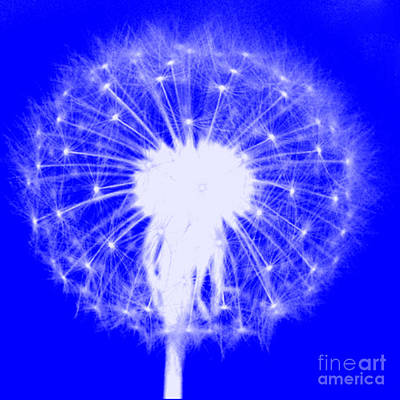 Digital Art - Dandylion Blue by Clayton Bruster