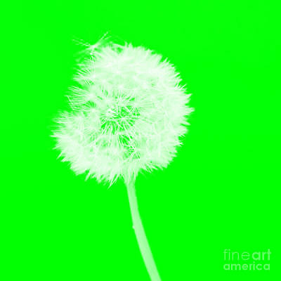 Digital Art - Dandylion Green by Clayton Bruster