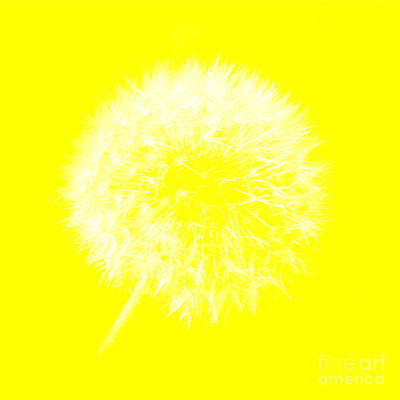 Digital Art - Dandylion Yellow by Clayton Bruster