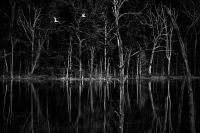 Photograph - Dangerous Flight by Andrew Kubica