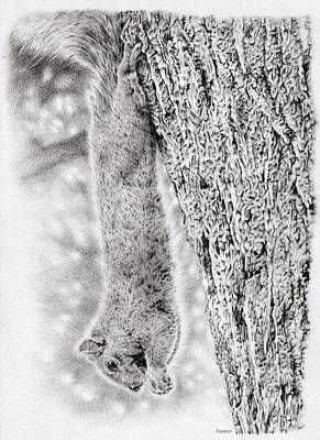 Animals Drawings - Dangling Squirrel by Casey