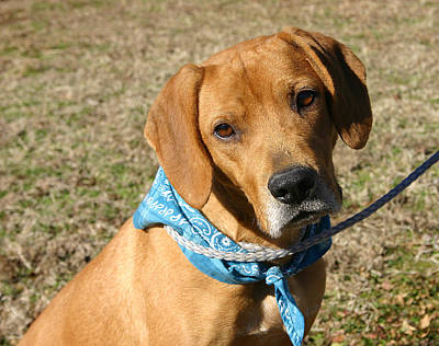 Mountain Cur Photograph - Danny At The Shelter by Nina Fosdick