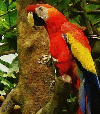 Vegetation Drawing - Danse Macaw by Jeffrey Kolker