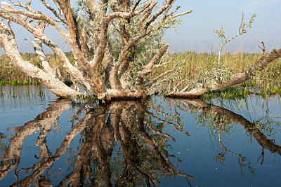 Danube Delta During Spring Art Print by Martin Zwick