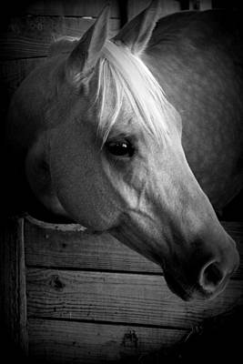 Photograph - Dapple Gray Bw by Sheri McLeroy