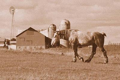 Horse Photograph - Dapple Grey Draft Horse by Megan Luschen