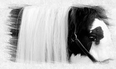 Gypsy Vanner Digital Art - Darby Dan - Gypsy Vanner by Gilbert Photography And Art