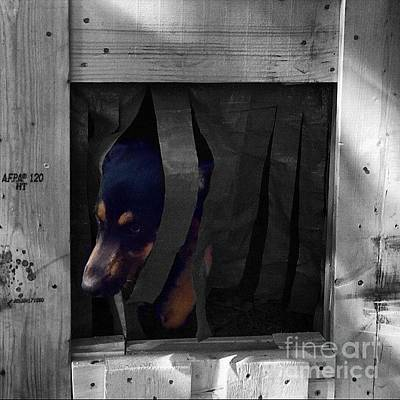Dogs Wall Art - Photograph - Darcy  #dog #dogs #darcy #gsd by Abbie Shores