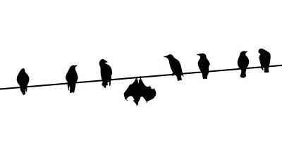 Minimal Drawing - Dare To Be Different - Birds On A Wire by Monica Margarida