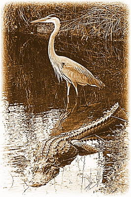 Photograph - Daring Fate In Sepia by Sheri McLeroy