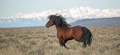 Wild Mustang Photograph - Dark Beauty by Sandy Sisti