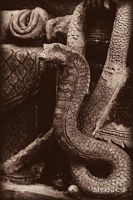 Photograph - Dark Cobra by Nola Lee Kelsey