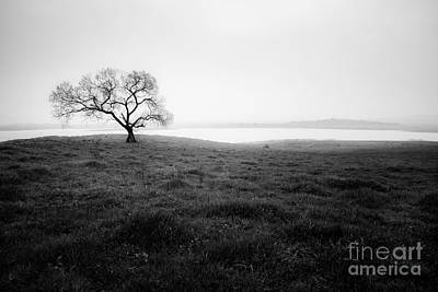 Photograph - Dark Cottonwood by Alexander Kunz