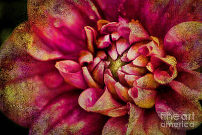 Blend Photograph - Dark Dahila by Darren Fisher
