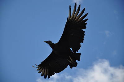 Dark Eagle  Art Print