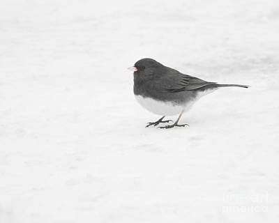 Art Print featuring the photograph Dark-eyed Junco In Winter by Anita Oakley