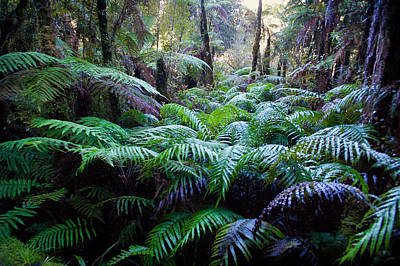 Photograph - Dark Ferns by Jenny Setchell