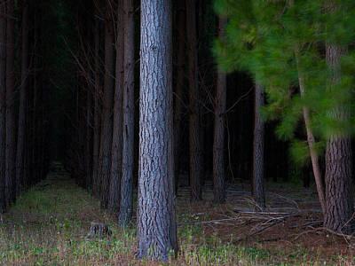 Dark Forest Art Print by Tim Nichols