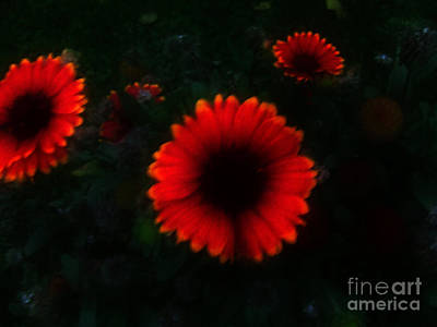 Photograph - Dark Garden by Scott B Bennett