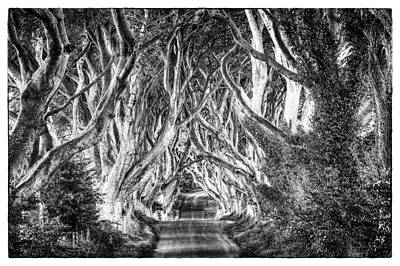 Photograph - Dark Hedges by Craig Brown