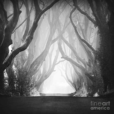 Dark Hedges IIi Art Print