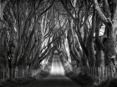 Dark Hedges Ireland Art Print by Tom Odaniell