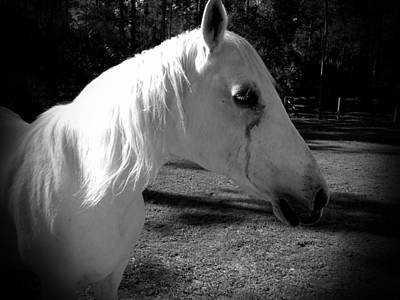 Photograph - Dark Horse 2 by Chasity Johnson