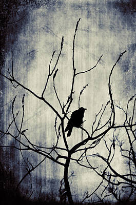 Emo Digital Art - Crow In Dark Lights by Gothicrow Images