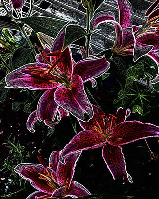 Photograph - Dark Lillies by Ann Tracy