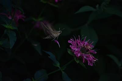 Photograph - Dark Nigh Of The Moth by Rae Ann  M Garrett
