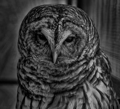 Photograph - Dark Owl by Don Kleinschmidt