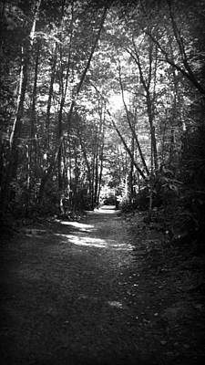 Photograph - Dark Path Through The Woods In Black And White by Kelly Hazel