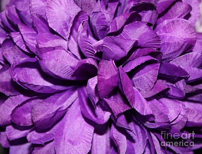 Photograph - Dark Purple Colored Flower by John Telfer