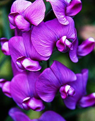 Orchid Photograph - Dark Purple Orchid by Xt Leavitt