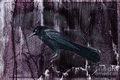 Photograph - Dark Raven by David Arment
