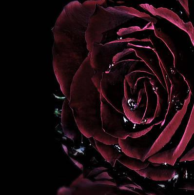 Dark Rose 2 Art Print by Ann-Charlotte Fjaerevik