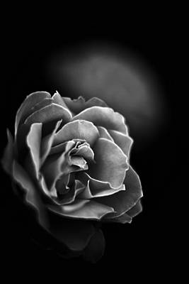 Photograph - Dark Rose by Sennie Pierson