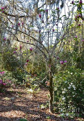 Photograph - Dark Shadows Magnolia Tree by Carol  Bradley