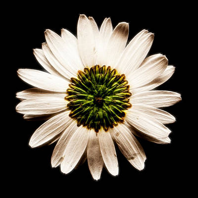 Photograph - Dark Side Of A Daisy Square Fractal by Weston Westmoreland