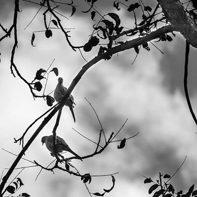 Photograph - Dark Sky Doves by Melinda Ledsome